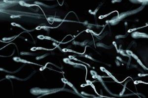 Giá đỗ cải thiện chất lượng tinh trùng