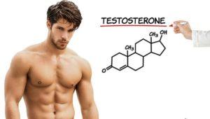 Phát triểm cơ bắp, chất béo và xương- Vai trò của hoocmon nam